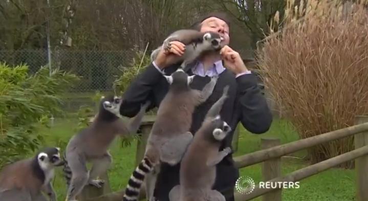 Lemurs attack